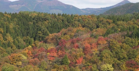 行楽日和 泉水ロードの紅葉