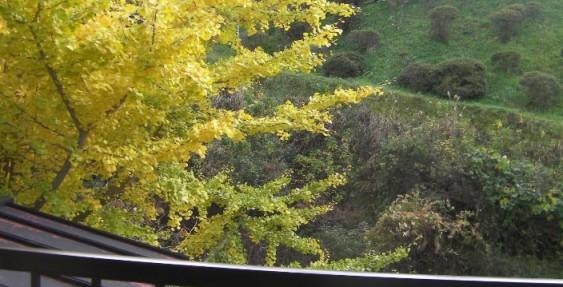 清風荘の窓から紅葉を楽しむ♪