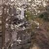 春の日差しに誘われて・・・