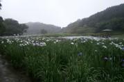 雨の神楽女湖~花しょうぶ園~